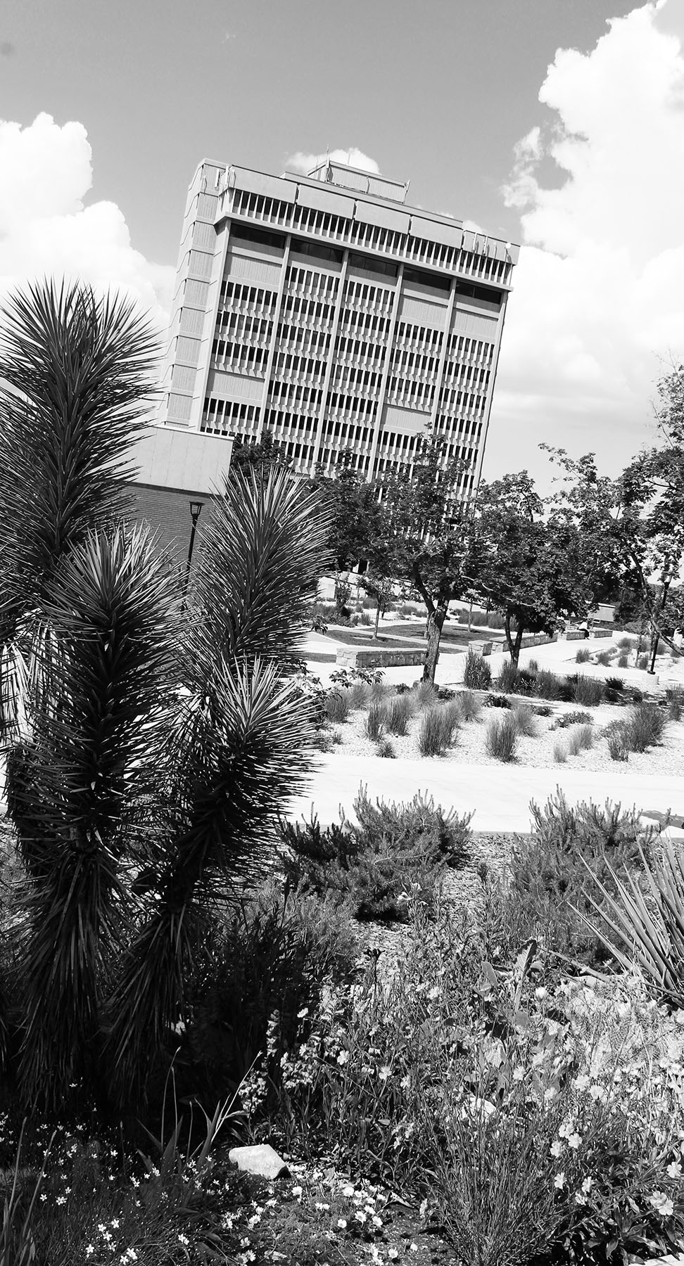picture of Behavioral Science Tower with xeriscape foreground